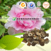 Paeonol/Moutan Bark Extract Manufacturer