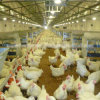 Poultry Control Shed Equipment with Customized Prefabricated House