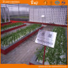 Extensively Used Polycarbonate Sheet Multi-Span Venlo Type Greenhouse