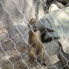 Monkey Cage Mesh/Stainless Steel Wire Rope Mesh/Netting