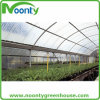 Tomato Planting Multi-Span Tunnel Green House