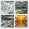 Chicken Cage System for Poultry Farm (layer and broilers)