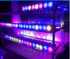 Purple, Blue, Yellow LED up Down Light