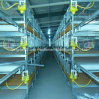 Chicken Cages for Broiler and Layer in Poultry House with Farm Construction