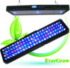 Timer LED Aquarium LightingのIt2080 99X3w