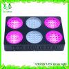 X-Вырастите СИД вырастите спектр светлого света завода полный для сеянцев, котор Hydroponics растет света заводов 126PCS/LED3w 5292lm