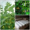 식물성 Support Net 15cm x 15cm