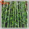 Fast natürlicher grüner künstlicher glücklicher Bambusbaum