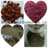10:1 del Ginseng del extracto natural de alta calidad de la hoja/del extracto del Ginseng de HPLC