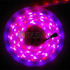 Indicatore luminoso di striscia lungo di vita attiva 5050 SMD Digitahi LED IP65