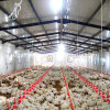 Оборудование автоматического цыпленка для продукции бройлера