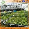 판매를 위한 10년 보장 100%년 바이어에 의하여 강화되는 플라스틱 농업 온실