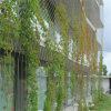 Sistema inoxidável da parede do verde do engranzamento do cabo entrançado de aço (engranzamento/rede da corda de fio do aço inoxidável)