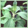 Alta polvere di Stevia di Qulaity su vendita