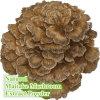 자연적인 Maitake 버섯 추출 분말