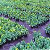 Tissu biodégradable de lutte contre les mauvaises herbes De jardinage et d'agriculture d'approvisionnement de Direactly d'usine