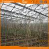 Type élevé serre chaude de Venlo de production couverte par Glass