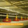 H schreiben Brathühnchen-Rahmen verwendetes Geflügel-Stangenbohrer-Zufuhr-System für Geflügel