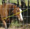 최신 Dipped Galvanized Goat 및 Cattle Fence 또는 Animal Fence (XMS04)
