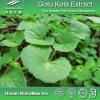 Alta calidad Gotu Kola Extract (30%~90%asiaticoside)