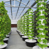 플레스틱 필름 농업 온실