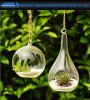 Вися стеклянный Hydroponic контейнер Terrarium вазы плантатора цветка
