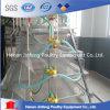Q235 de Apparatuur van het Landbouwbedrijf van het Gevogelte van het Ei van de Kip van de Draad van het Staal