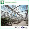 Estufa do vidro da Multi-Extensão de Agricultur