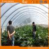 성장하고 있는 야채를 위한 최신 판매 굴렁쇠 온실