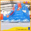 Trasparenza di acqua divertente dei pesci di mare (AQ993)