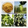 Xanthohumol natural, extrato dos lúpulos da flavona dos lúpulos