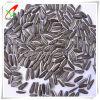 O tipo longo girassol do preto semeia 5009 22/64