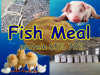 Feed Protein 65% 72%를 위한 물고기 Meal Powder