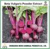 Betaina vulgaris dell'estratto della polvere di offerta del fornitore beta per il colorante naturale
