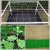 Pflanze Support Net 100mm x 100 mm