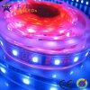 Striscia accessibile di RGB LED (GRFT1000-42RGBD)