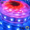 Tira direccionable del RGB LED (GRFT1000-42RGBD)