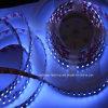 Luz de tira flexível UV SMD3528 do diodo emissor de luz do produto novo (365-370nm)