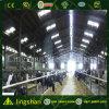 Cultivo de la vertiente prefabricada fabricación de acero de la vaca del bajo costo de la construcción de viviendas