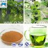 Extrait naturel de Paliurus de 100% Cyclocarya