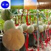 유기 미량 원소 아미노산 킬레이트 액체 잎 비료 아미노산
