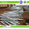 El poste concreto galvanizado sumergido caliente apoya el tornillo de /Ground/la pila del tornillo