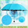 التقى ماء سحريّة زهرة مظلة, [أنتي-سون] مظلة