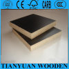 1220X2440mm 12mm Plywood Waterproof Shuttering Plywood