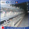 Les cages de poulet pour la volaille de pondeuse mettent en cage pour la ferme de couche d'oeufs de poulet