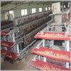 Volaille Farming Equipment Layer Chicken Cage pour le Nigéria