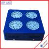 LED는 꽃이 만발하는 실내 화분용 화초와 자실 플랜트를 위해 가볍게 증가한다