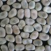 Фасоль Faba среднего размера Yunnan