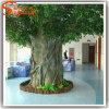 常緑のバンヤンのプラント木を美化する広州の卸売