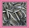 Les graines de tournesol de qualité